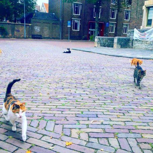 Afbeelding #000 voor het verhaal De katten zijn De Stad
