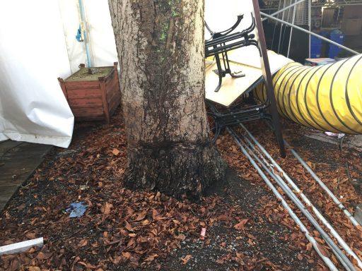 Afbeelding #000 voor het verhaal Breaking: de Marktboom heeft het overleefd