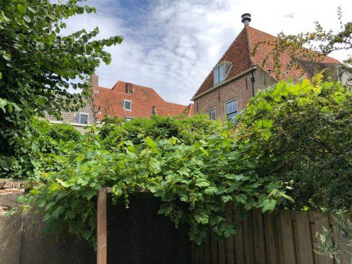 Afbeelding #000 voor het verhaal De Achterkant van De Stad Middelburg, mei-augustus 2019