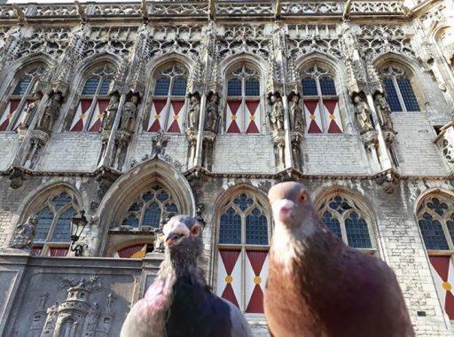 Afbeelding #000 voor het verhaal De duiven zijn De Stad