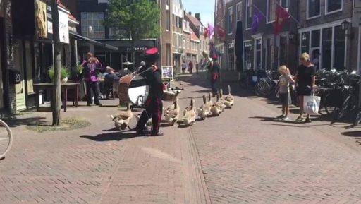 Afbeelding #000 voor het verhaal De ganzen zijn De Stad