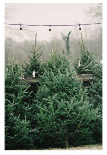 Afbeelding #000 voor het verhaal Een gratis kerstboom voor VOM-leden, op 4 december