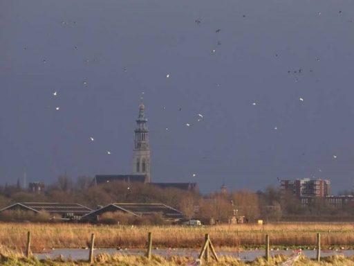 Afbeelding #000 voor het verhaal Het Verdartelde Middelburg