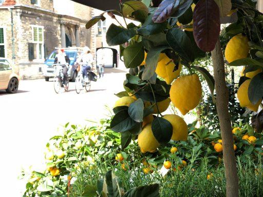 Afbeelding #002 voor het verhaal Huis van Bloemen heeft draai in Middelburg gevonden
