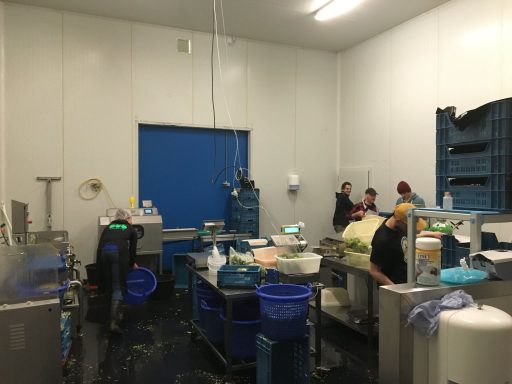 Afbeelding #001 voor het verhaal Jacobse & Leijnse verhuist productievloer naar Arnestein