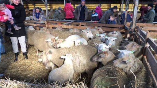 Afbeelding #000 voor het verhaal Lammetjesdag bij Kaljouw Landschapsbeheer in Middelburg