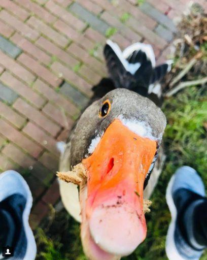 Afbeelding #000 voor het verhaal 'Maar ik houd van mijn stad'...Middelburg op Instagram jan-feb 2018