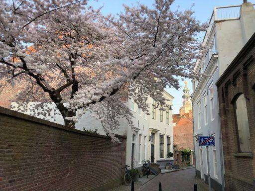 Afbeelding #000 voor het verhaal Middelburg bloeit, 30 maart 2019