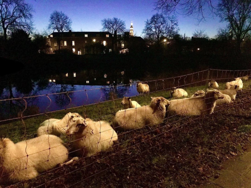 Afbeelding #000 voor het verhaal #Middelburg op Instagram, oktober-november 2019
