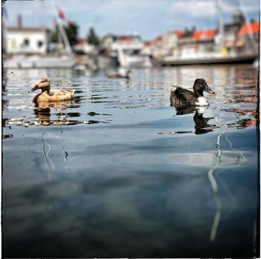 Afbeelding #003 voor het verhaal #Middelburg op Instagram, oktober-november 2019