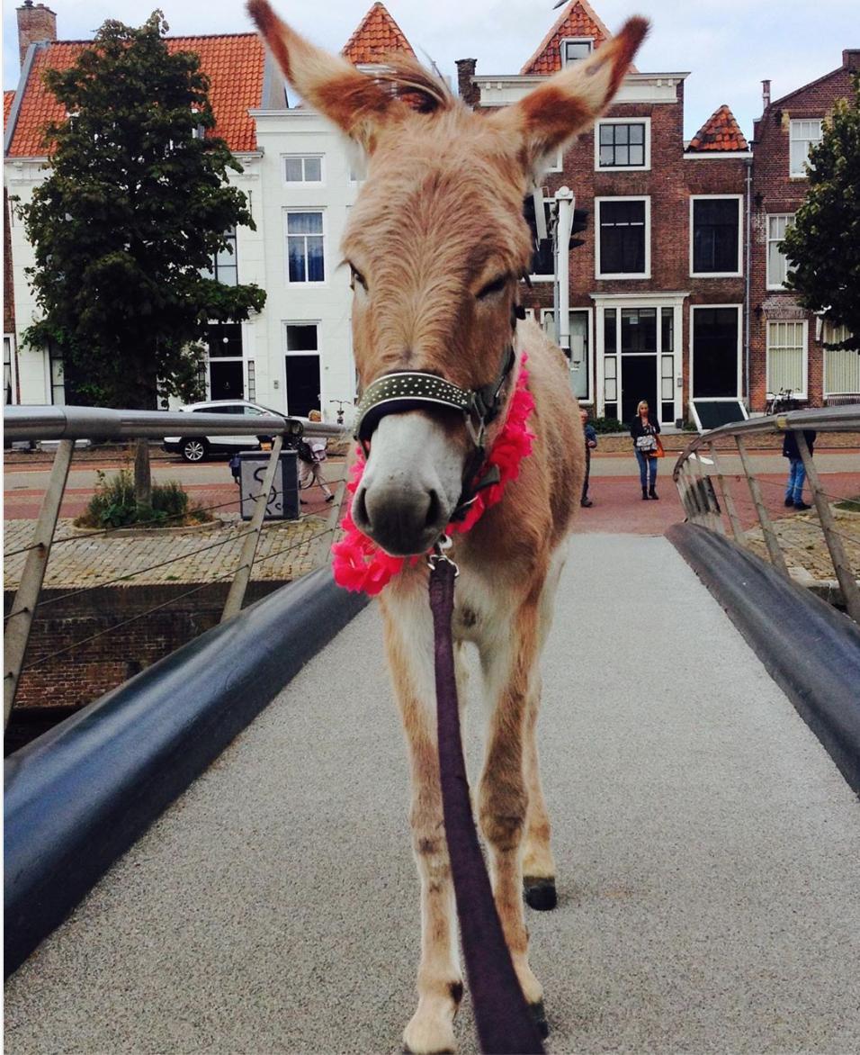 Afbeelding #000 voor het verhaal #Middelburg op Instagram, september 2019