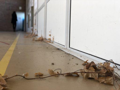 Afbeelding #001 voor het verhaal Nieuwbouw Hof van Oost-Indië deel 1: de laatste gymzaalglimpen