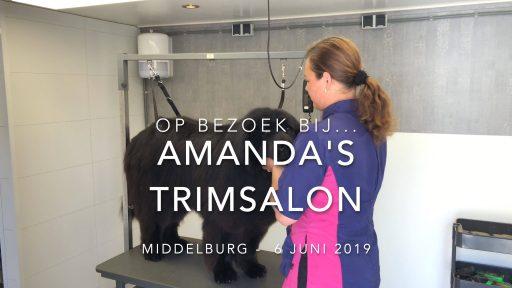 Afbeelding #000 voor het verhaal Op bezoek bij Amanda's Trimsalon in Middelburg