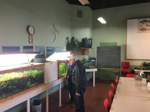 Afbeelding #000 voor het verhaal Over het naderend einde van Aquariumvereniging Barbus conchonius