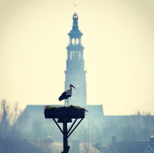 Afbeelding #000 voor het verhaal Pareltjes! #Middelburg op Instagram, januari-februari 2019