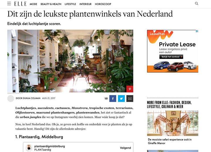 Afbeelding #000 voor het verhaal PlantAardig: een van de leukste plantenwinkels van Nederland