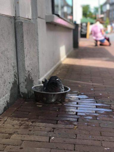 Afbeelding #000 voor het verhaal Van hondenbak tot duivenbad