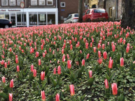 Afbeelding #002 voor het verhaal Verlangen naar de tulpen van het Seisplein