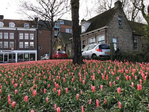 Afbeelding #003 voor het verhaal Verlangen naar de tulpen van het Seisplein