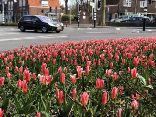 Afbeelding #004 voor het verhaal Verlangen naar de tulpen van het Seisplein