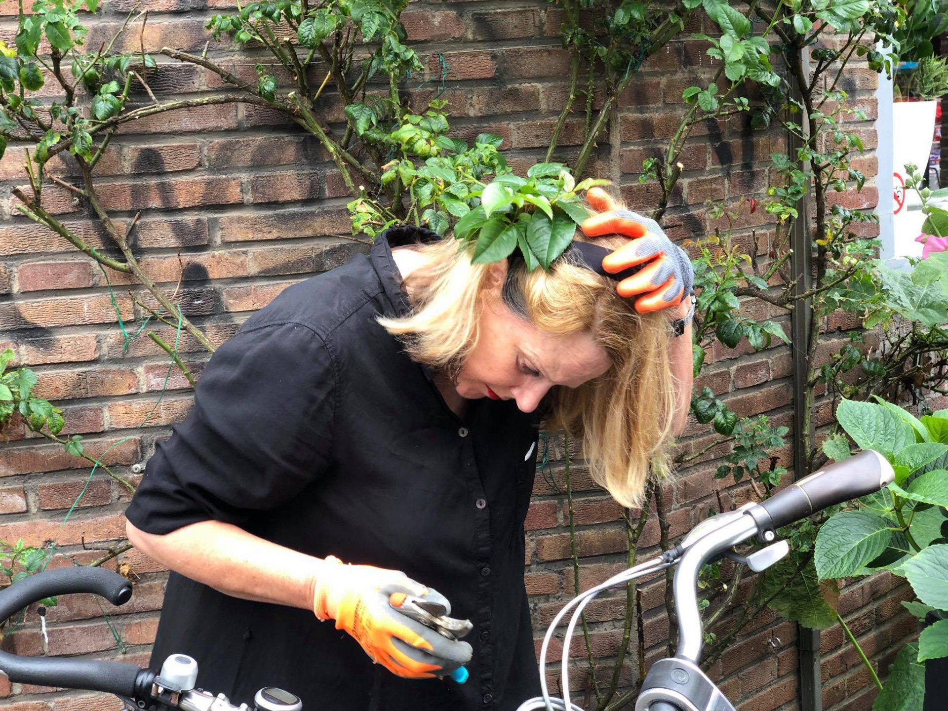 Afbeelding #000 voor het verhaal Wie snoeit al die rozen van Middelburg Rozenstad toch?