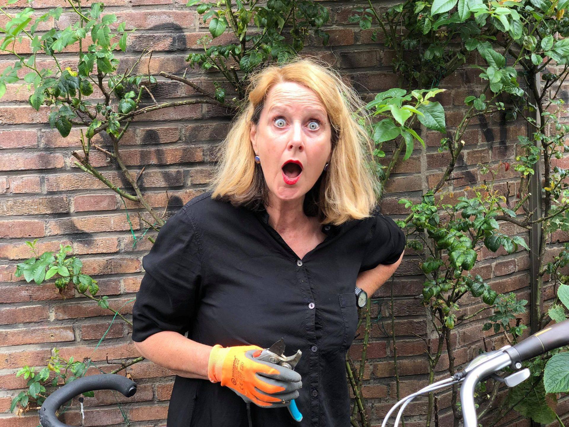 Afbeelding #001 voor het verhaal Wie snoeit al die rozen van Middelburg Rozenstad toch?