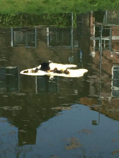 Afbeelding #000 voor het verhaal Zonnebaden op de Herengracht