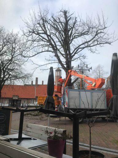 Afbeelding #002 voor het verhaal Koorkerkstraatkastanje definitief geveld