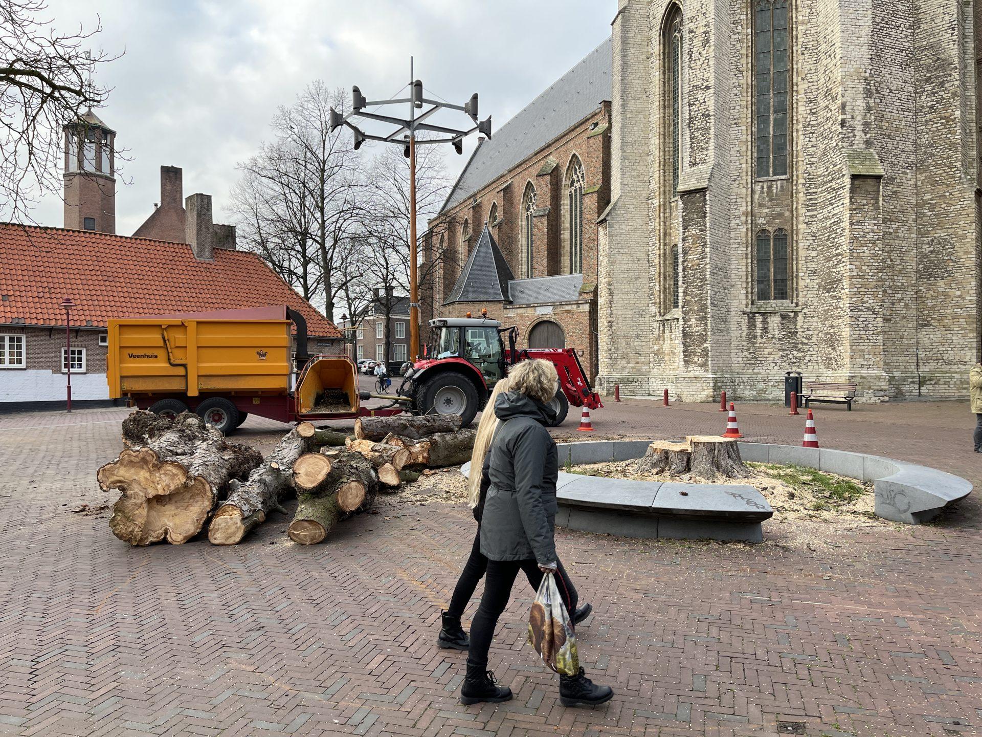 Afbeelding #004 voor het verhaal Koorkerkstraatkastanje definitief geveld