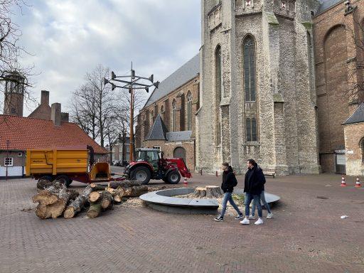 Afbeelding #006 voor het verhaal Koorkerkstraatkastanje definitief geveld