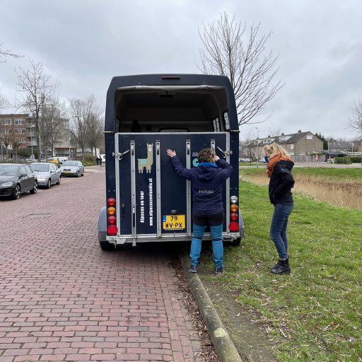Afbeelding #001 voor het verhaal Een Alpaca Delivery in Middelburg-Zuid