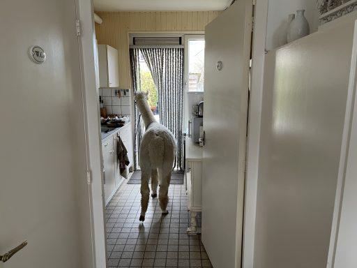 Afbeelding #003 voor het verhaal Een Alpaca Delivery in Middelburg-Zuid