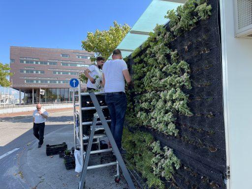 Afbeelding #000 voor het verhaal Verticale tuintjes voor busstation Kanaalweg Middelburg