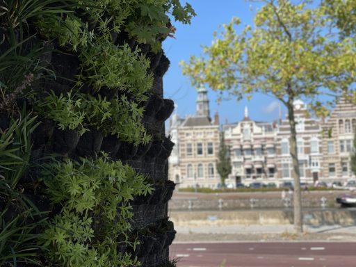 Afbeelding #009 voor het verhaal Verticale tuintjes voor busstation Kanaalweg Middelburg